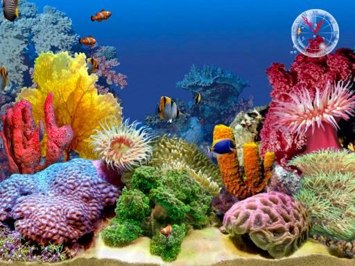project:aquarium-computer.jpg