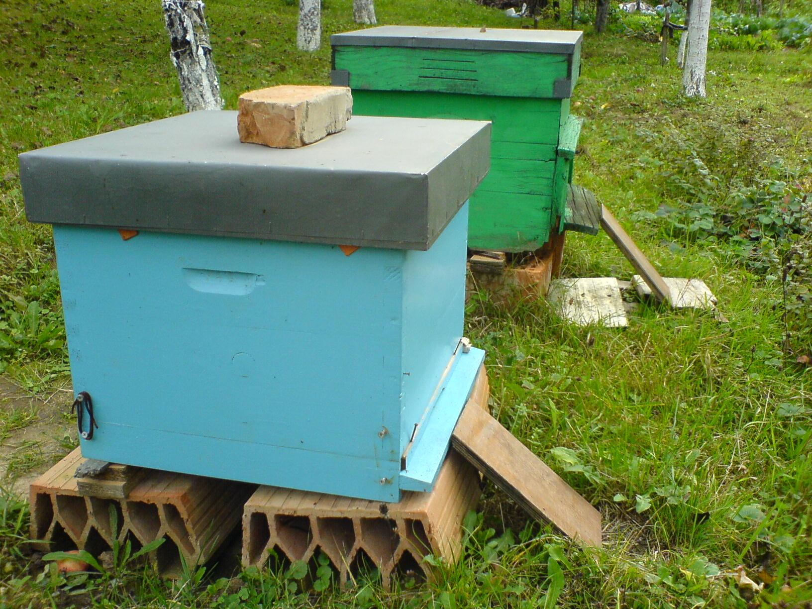 beehive-generic.jpg