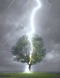 lightning-striking-tree.jpg