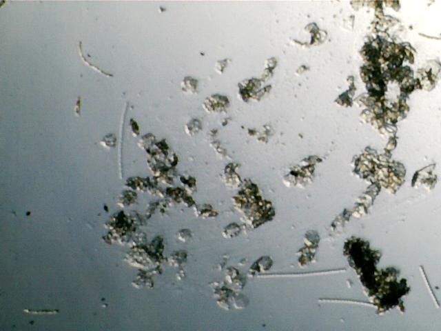 scope:plankton1.png