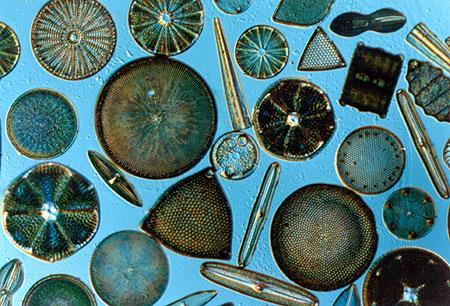 event:diatom.jpg